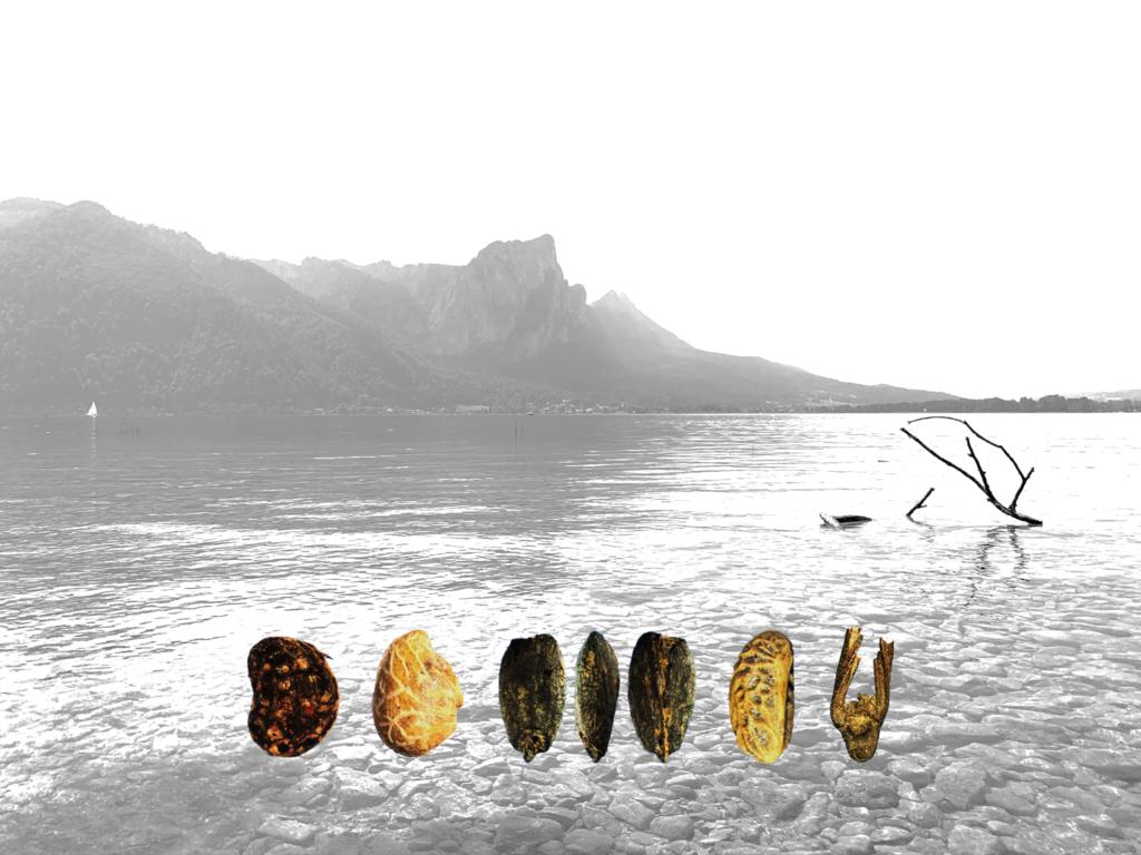 """Vortrag """"Waldpflege vor 5600 Jahren? Was uns die spätneolithischen Pfahlbauten am Mondsee und Attersee (Oberösterreich) über prähistorische Waldnutzung verraten können"""" von Thorsten Jakobitsch – Vortragsreihe """"Neue bioarchäologische Forschungen"""""""